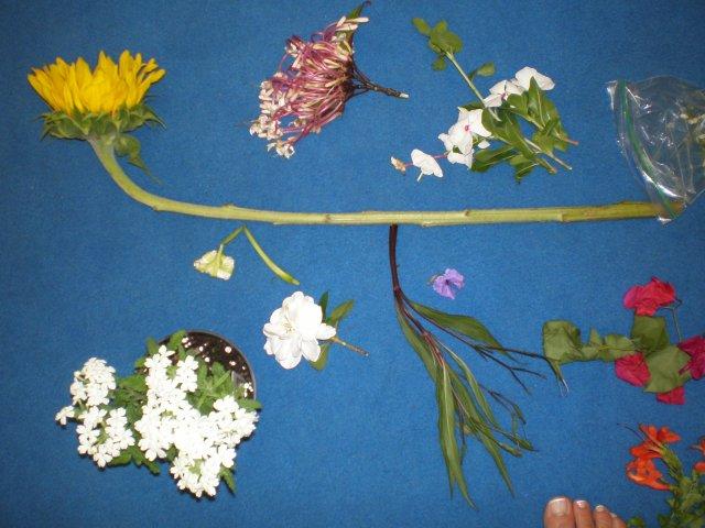 image flowers-jpg